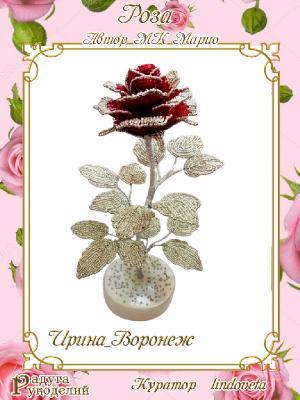 Галерея выпускников Роза от Марио 033f1c5785abf6164e6c27b22ff45a66