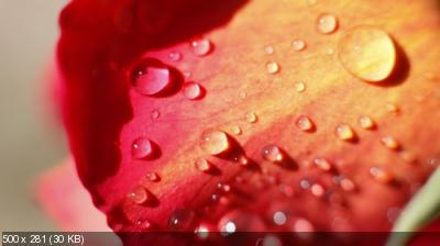 Classy Wallpapers (764)