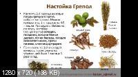 Применение грецкого ореха в современной медицине (2021) Вебинар
