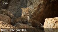 Скала леопардов / The Leopard Rocks (2017) HDTVRip 1080p