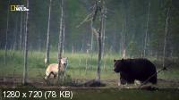 Волк против медведя / Wolf vs. Bear (2018) HDTVRip 720p